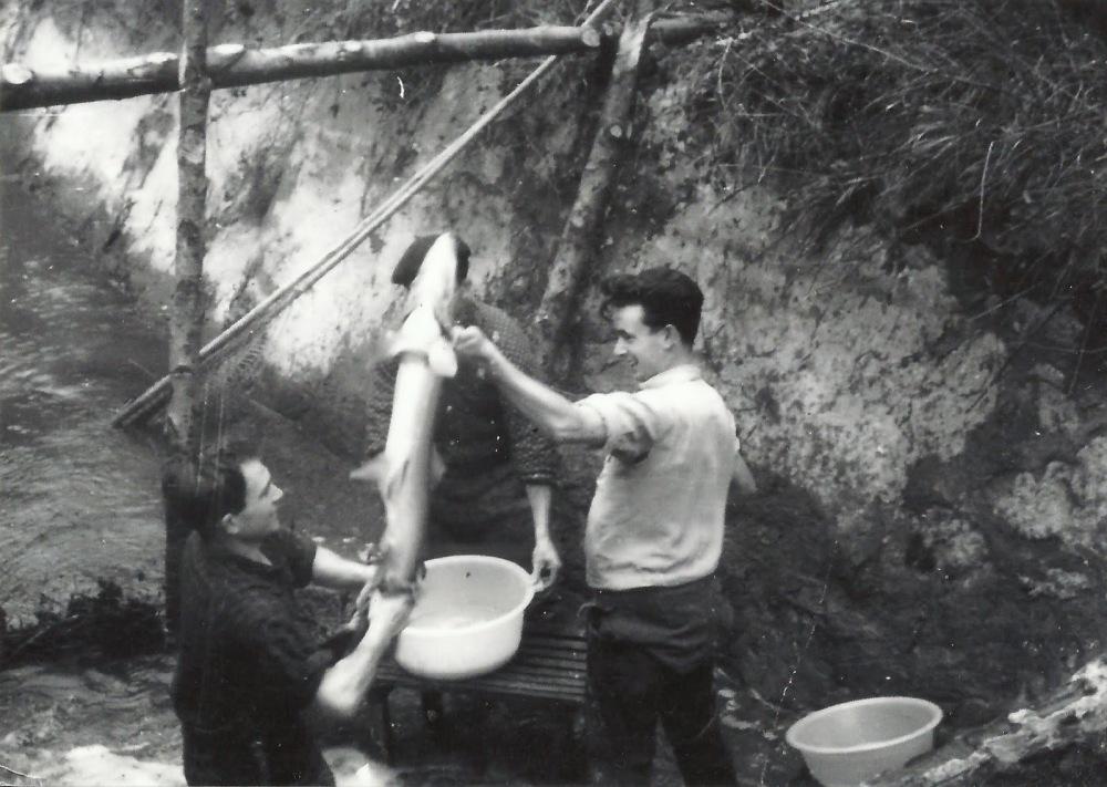 pesando salmones1 (Santi Brera)